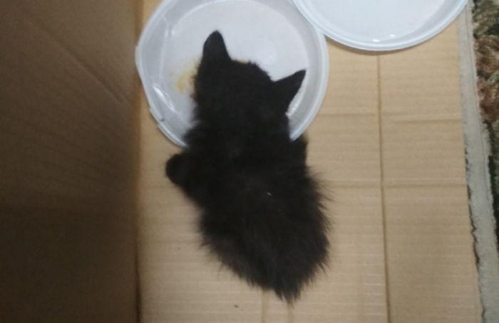 Спасатели достали котенка, просидевшего пять дней вдымоходе назаводе