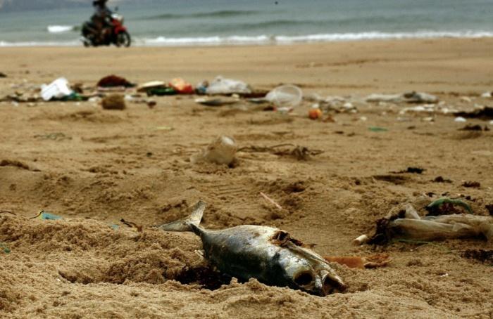Из-за жары рыба может начать массово гибнуть