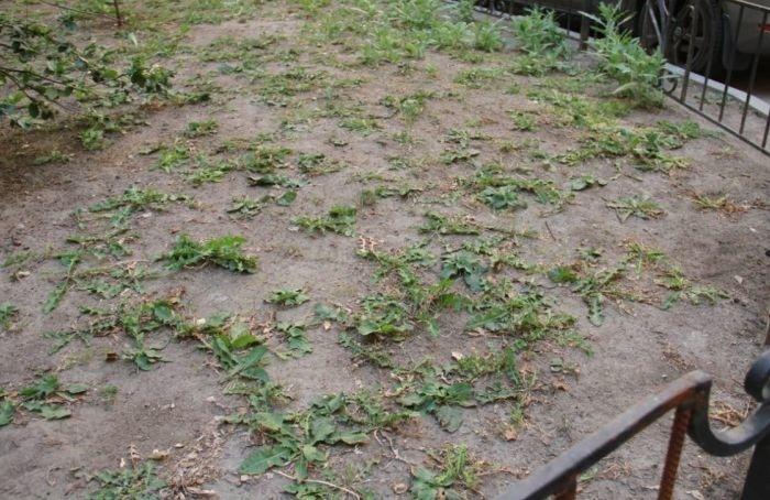 Жители Центрального района озеленят один издворов наулице Рубинштейна