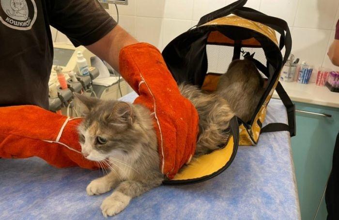 «Пусть сидит, пока несдохнет»: петербурженка оставила кошку умирать вжару без еды иводы