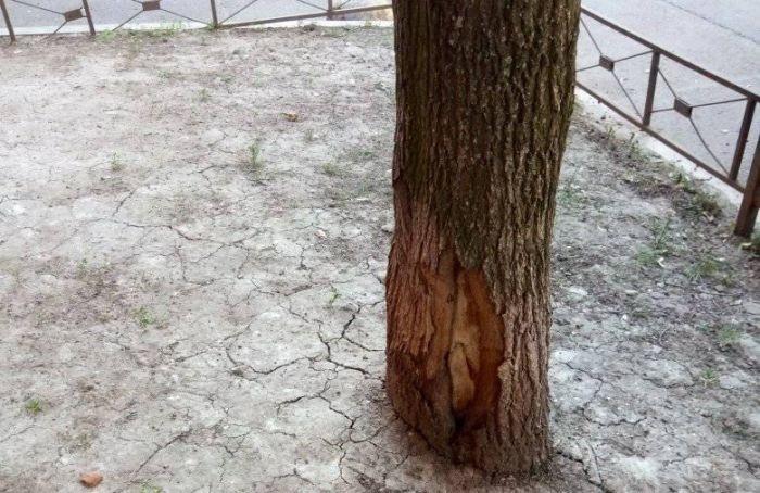 Из-за жары вгороде приостановили стрижку газонов