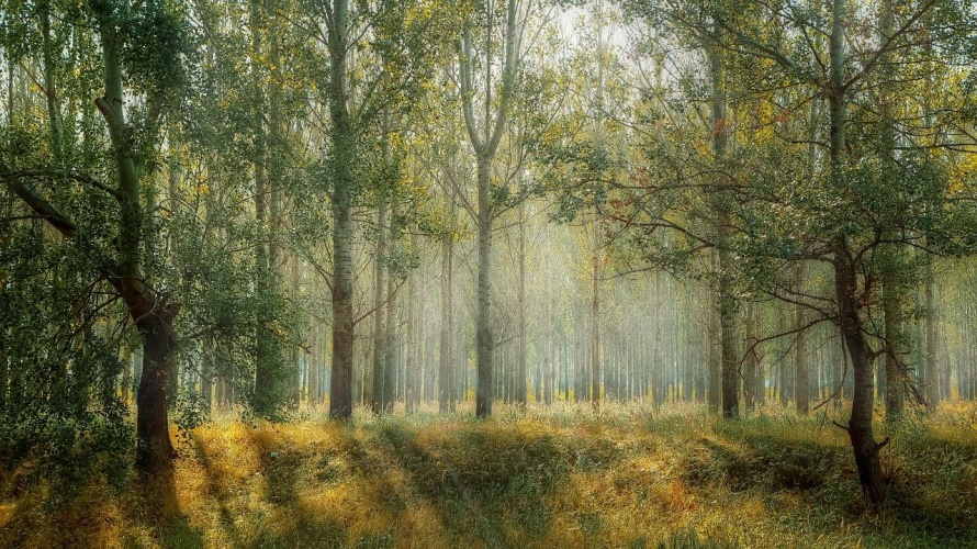 forest-1072828_1280.jpg