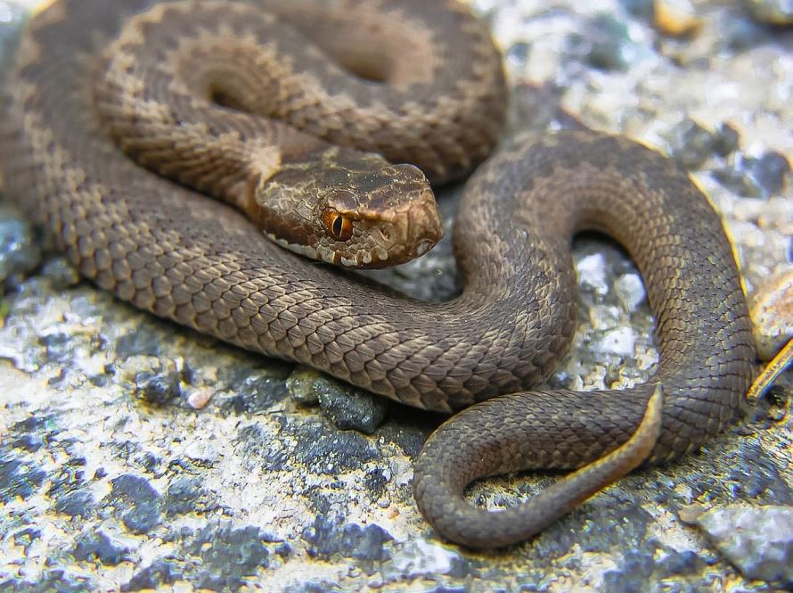 snake-947367_1280.jpg