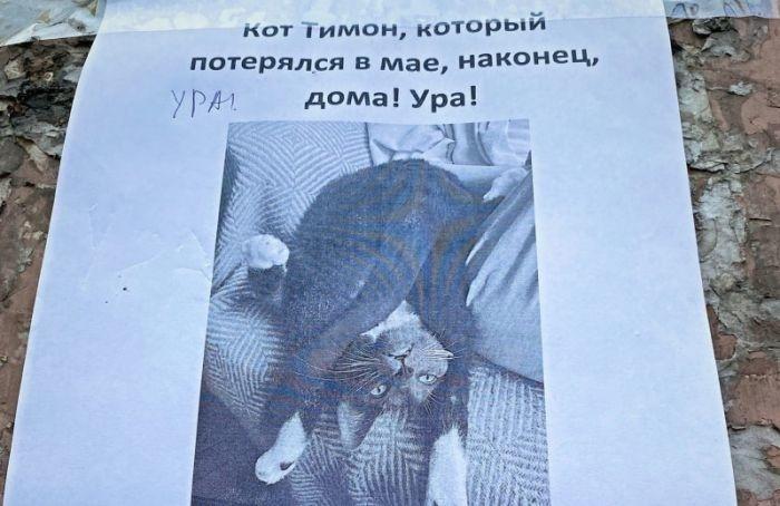 Пропавшего вмае кота Тимона нашли