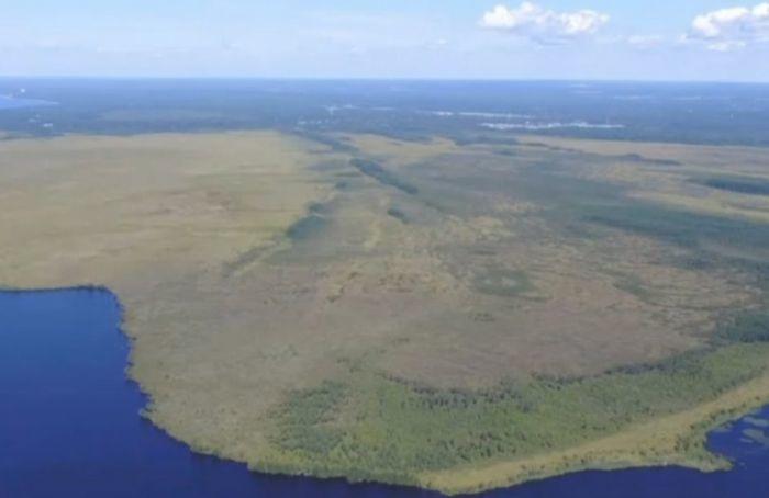 Взаказнике «Сестрорецкое болото» усилят охрану