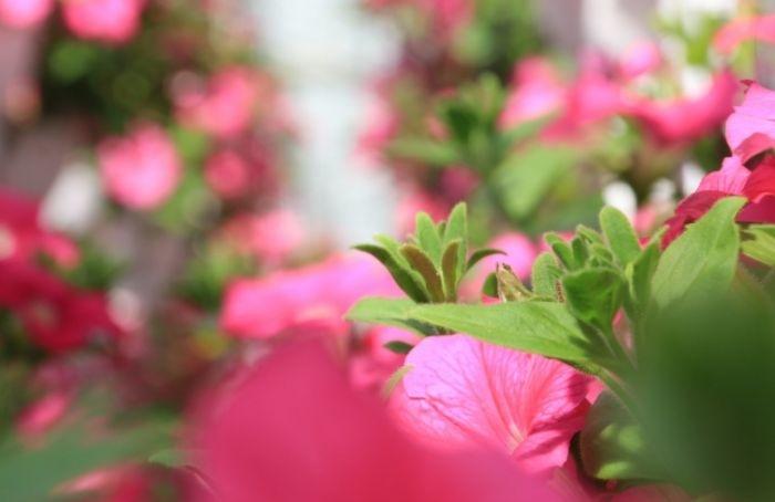 Сад непрерывного цветения создадут в2021 году вПриморском районе