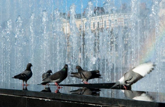 Петербуржцев ожидает очередной жаркий день без дождей иновый рекорд