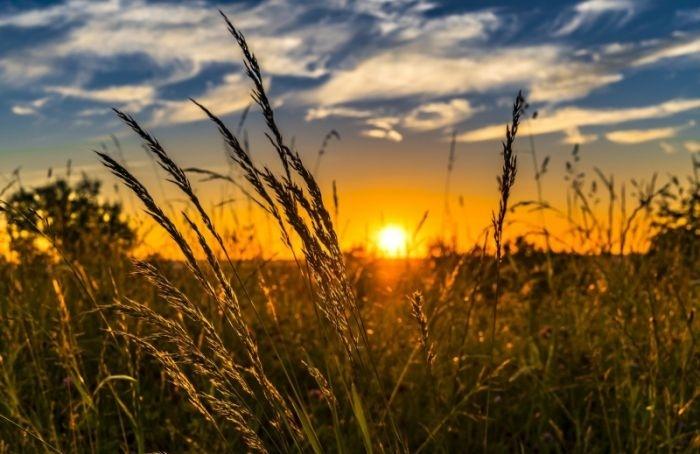 Еще один солнечный день ожидает Петербург