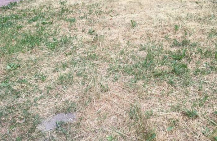 Оксана Дмитриева требует срочно организовать полив газонов вПетербурге