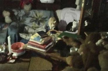Жители Приморского района помогают пенсионерке-блокаднице сдесятками кошек