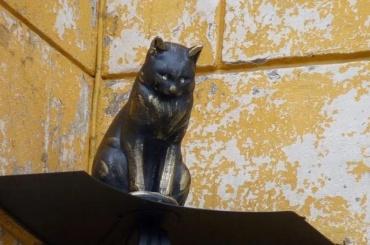ВПетербурге ограбили кота Елисея