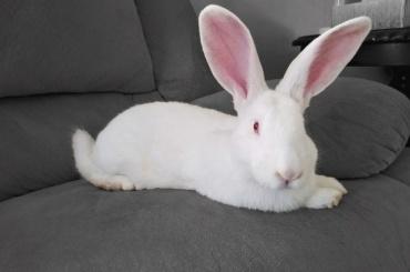 ВПетербурге ищут семьи для 48 кроликов, чтобы спасти имжизнь