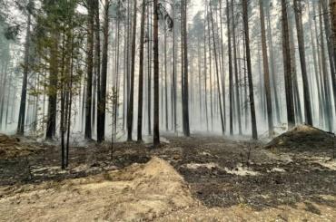 ВКарелии тушат 22 природных пожара