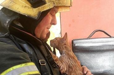 Петербургские спасатели откачали кота после пожара