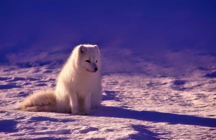 КСП нашла нарушения в работе комитета по делам Арктики на сумму 13,3 млн рублей