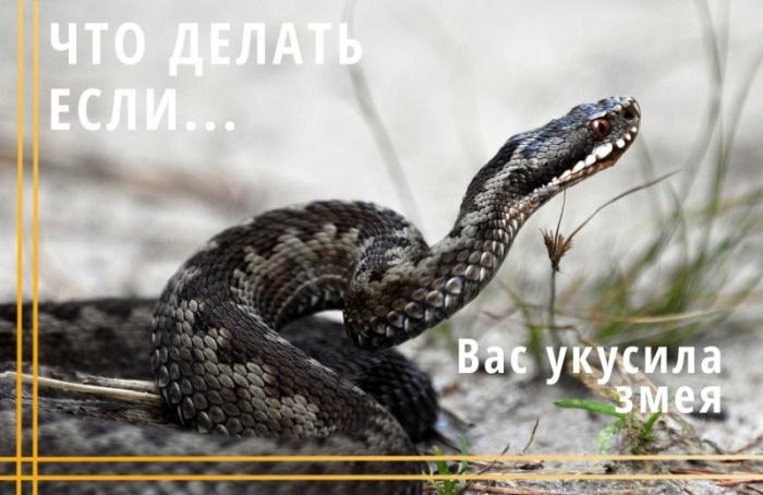 Что делать если… вас укусила змея