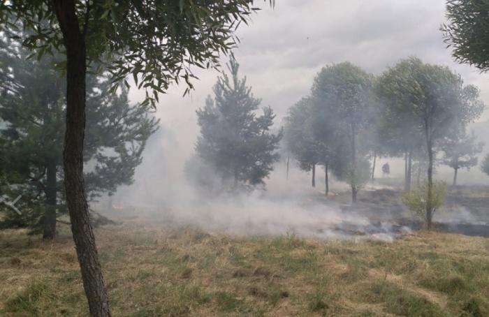 ВПетербурге горел Полежаевский парк