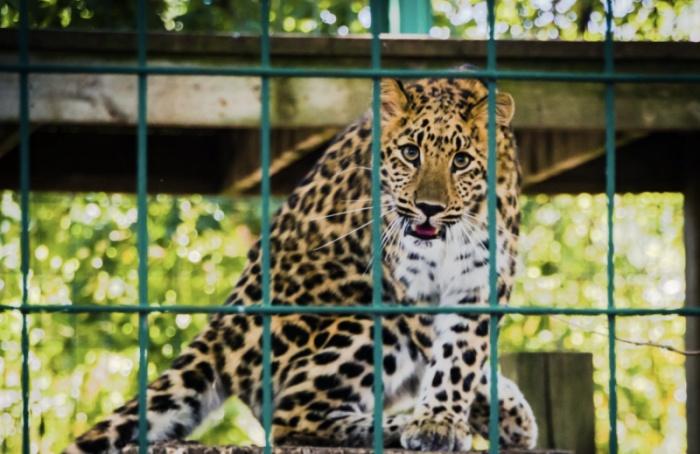 Депутат просит защитить животных зоопарка отшума фейерверков
