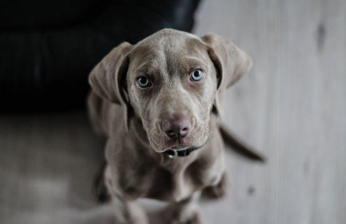 «ОСАГО для собак»: хозяев опасных питомцев могут обязать платить страховку