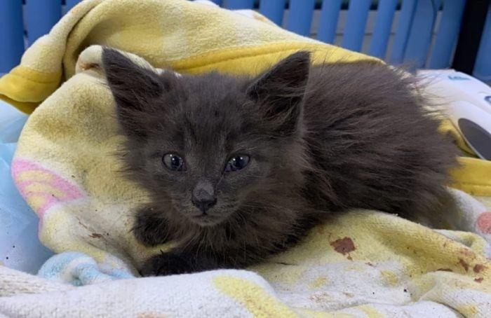 Петербуржцы спасли котенка наЗСД