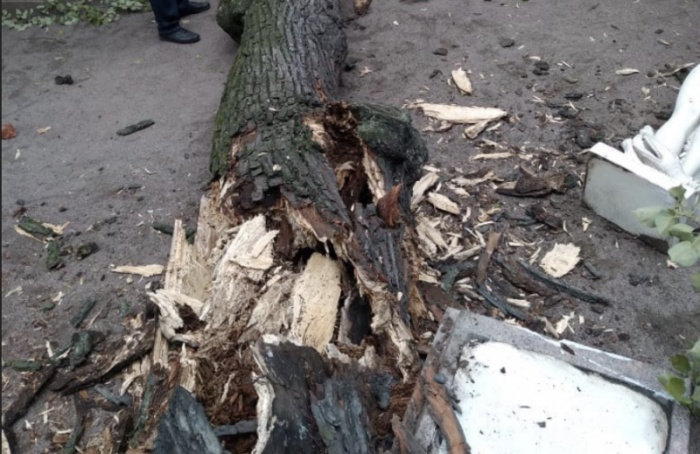 ВЛетнем саду отсильного ветра настатую упало 260-летнее дерево
