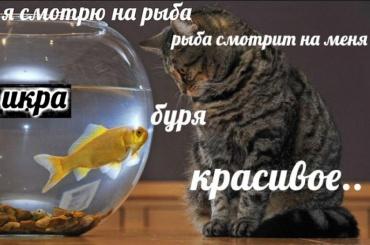 Откуда взялся новый мем про котов и«рыбов»