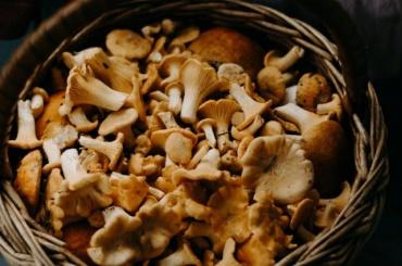 Роспотребнадзор подсказал петербуржцам, как неотравиться грибами