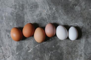 ИзЛенобласти вАфганистан отправят 2,5 млн куриных яиц