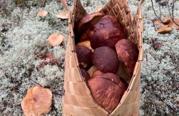 Грибники раскрыли место, где имудалось собрать целую корзину боровиков