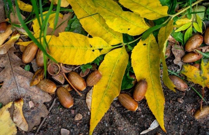 Петербуржцев приглашают на ботаническую экскурсию по Карповке