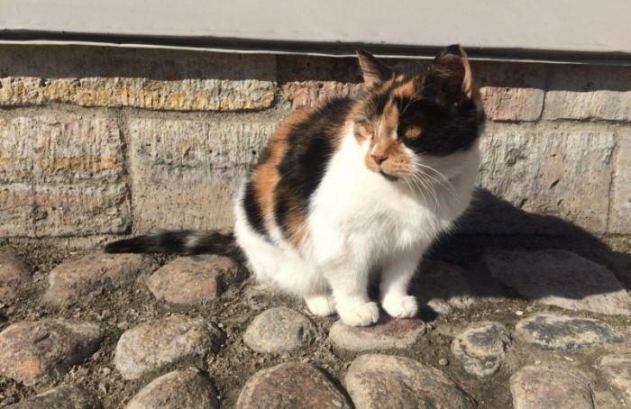 Умерла главная кошка Петропавловской крепости Капитолина