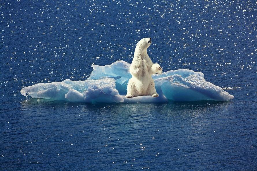 icebear-2199534_1280.jpg