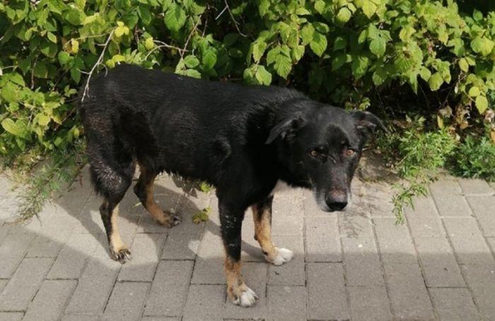 Жительница Красного Села вынесла живого пса напомойку