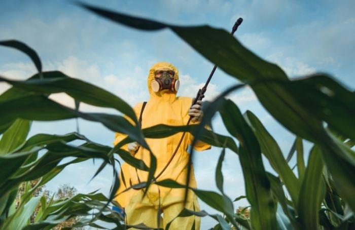 Опасныли ГМО ипочему ихбоятся