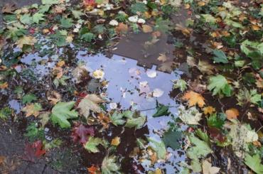 Парки исады Петербурга открыли после непогоды