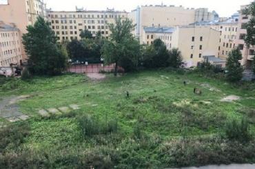 Общественный сад выкосили наПетроградской стороне