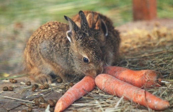 Ленинградский зоопарк получил 700кг вкусных подарков для животных
