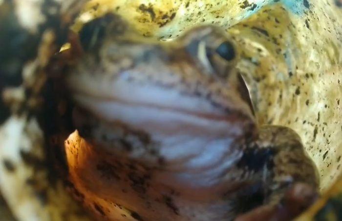 Лягушку— наволю, бутылку— впереработку: вПетербурге прошли «Чистые игры»