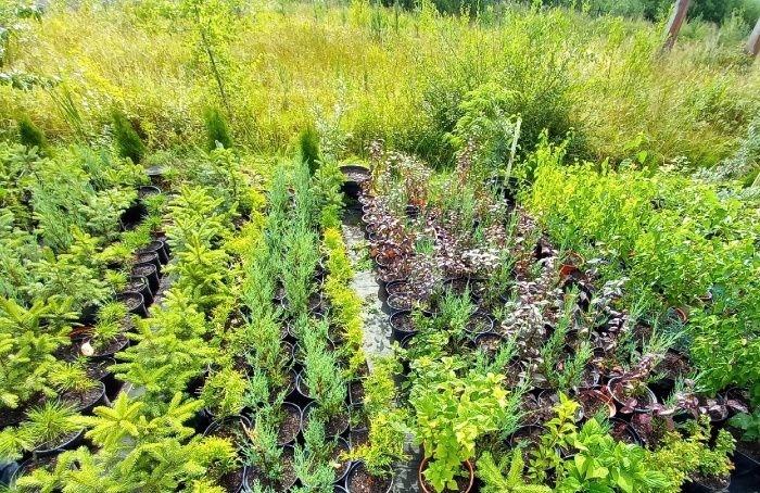 Жители Коломны 10октября озеленят дворы