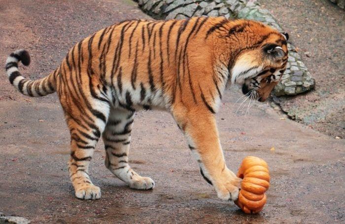 Ленинградский зоопарк приглашает отпраздновать День урожая