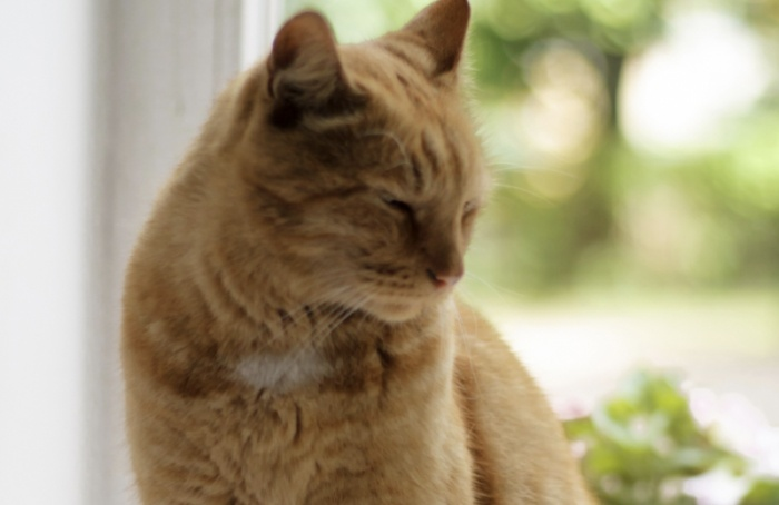 Музей Ахматовой объявил награду запотерянного кота
