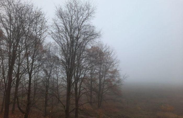 Утром вПетербурге ожидается туман