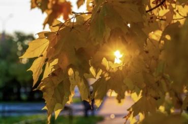 Петербург ждет солнечная погода сплотным ветром