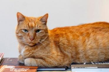 Старейший кот музея Анны Ахматовой потерялся