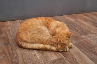 Музейный кот Ося вернулся вФонтанный дом