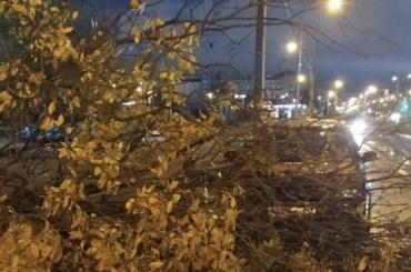 Сильный ветер повалил заночь несколько деревьев